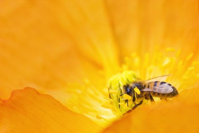 muscaturi insecte